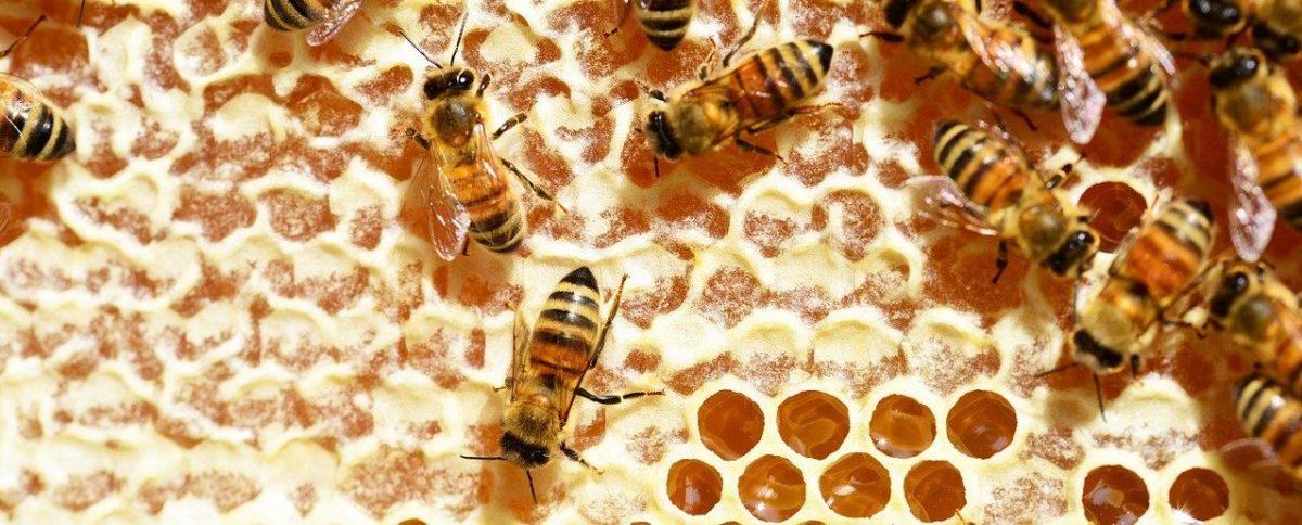 abeille et miel