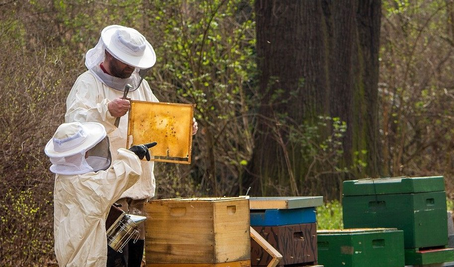 debutant apiculture