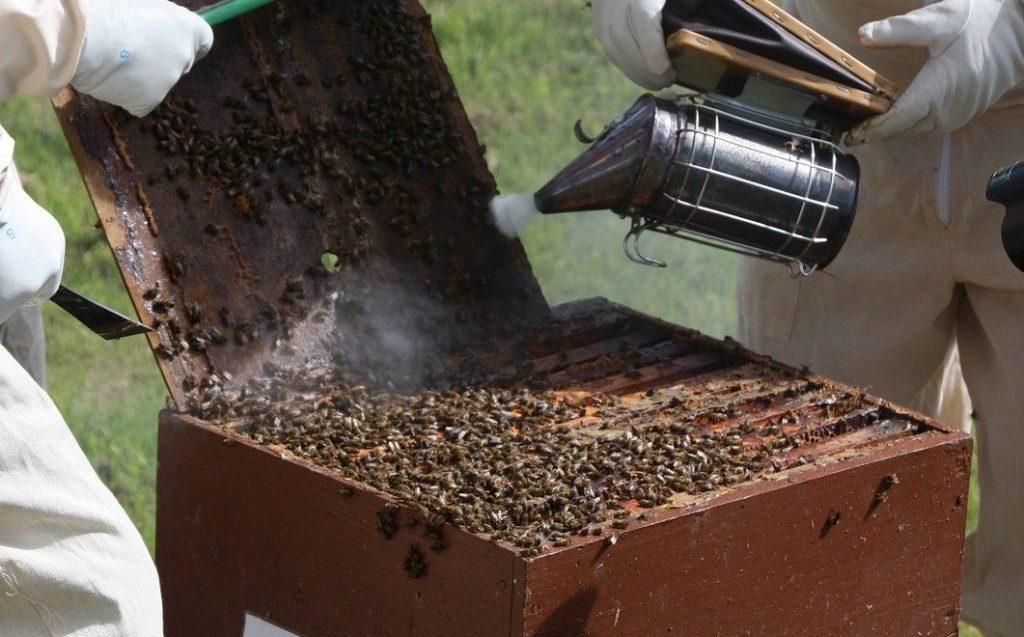 Utilisation d'un enfumoir sur une ruche