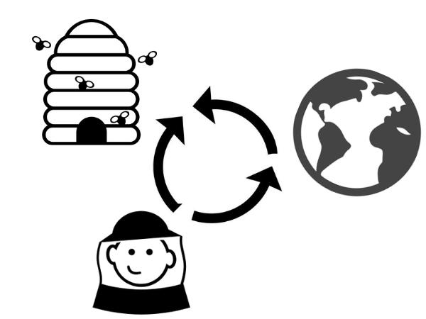 Interactions entre la ruche, son environnement et l'apiculteur.